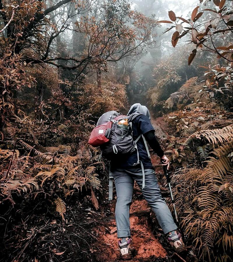Kisah Seorang Jurnalis, Diikuti Kuntilanak di Gunung Gede